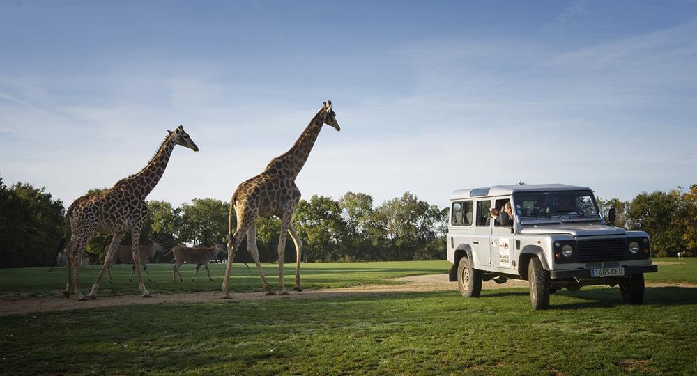 Camping Du Vieux Château : Girafe